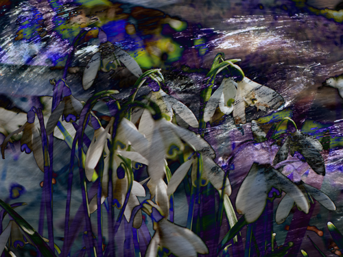 snowdrops and water 3