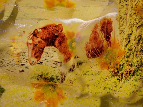 horse and primrose